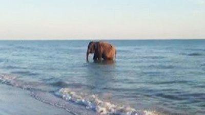 Флорида - родина слонов