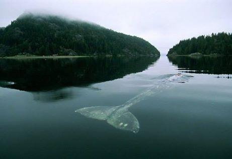 Одиночество кита