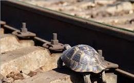 Черепаха впереди паровоза