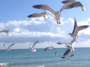Флорида - морская душа