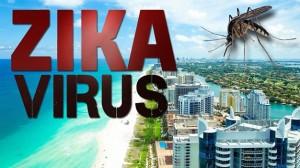 Вдруг откуда-то летит маленький комарик