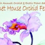 orchid-festival