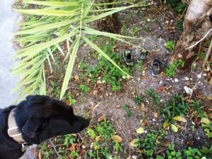 Новые флоридские тайны