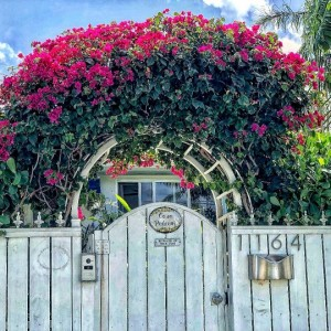 Miami Shores / Майами Шорс