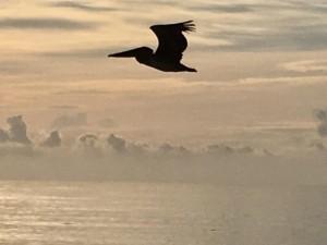 Про полет пеликана
