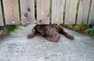 «Мой пес Ретт»