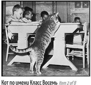 Кот, который ходил в школу