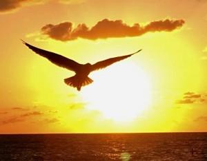 Птица по имени Флорида