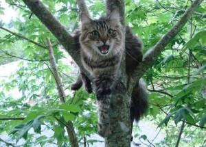 Как снять кота с дерева