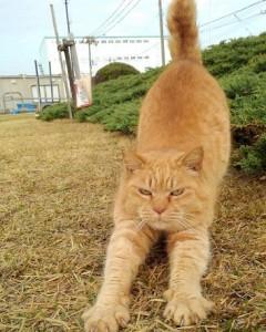 Путь к счастью лежит через кошек