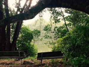 Старый парк рождает новые мысли