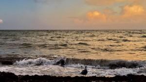 Маленькая чайка – большая метафора
