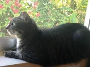У кошки четыре ноги, позади у нее длинный хвост…