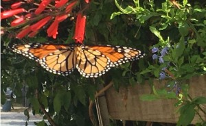 Летите, бабочки, летите!