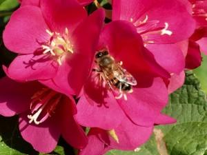 Пчелиный рай