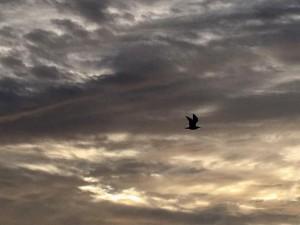 Птица над океаном