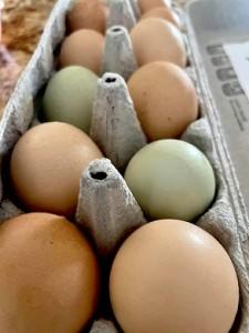 В Дейви за яйцами