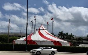 Куда приехал цирк?