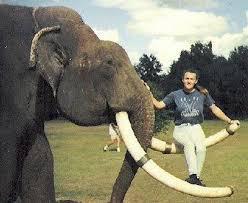 Два хвоста, два бивня и 250 слонов
